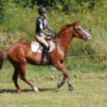 Marla the horse cantering in a field