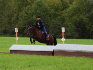 Chip the horse jumping in a grassy field