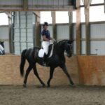 DC the horse trotting in an indoor arena
