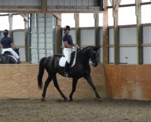 Dawson's Creek the horse walking in an indoor arena