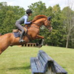 Fox the horse jumping benches